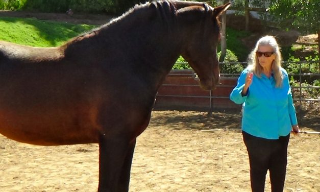 The Amazing Lifelong Journey Developing Communication Skills With Horses