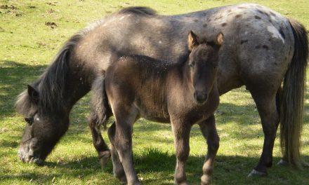 Head Start For Foals