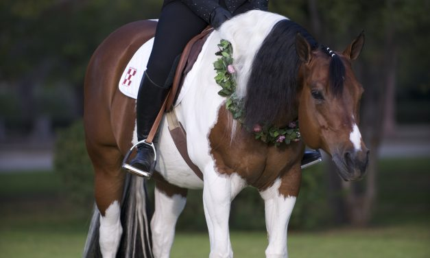 Western Dressage: Staying In Control