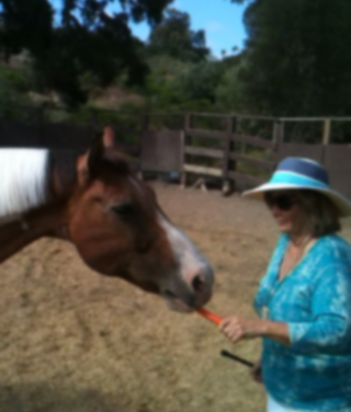 What Do You Consider To Be Rude Behavior In A Horse? Part II