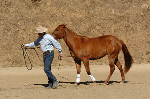 Leading Your Horse Properly