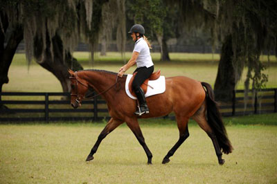 "Western Dressage: Similarities Between Western And ""Regular"" Dressage"