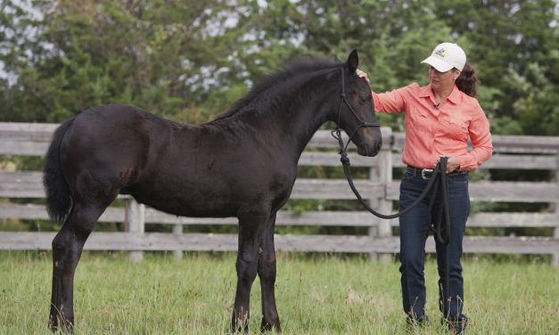 Off To A Good Start: Tips To Establish Respect With Your Young Horse