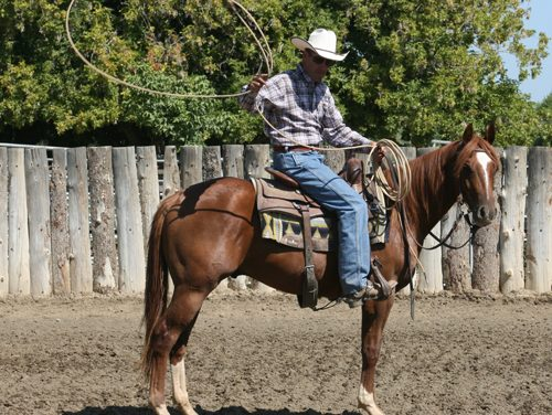 Teaching Your Horse To Handle A Rope