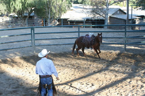 Round Pen Reasoning