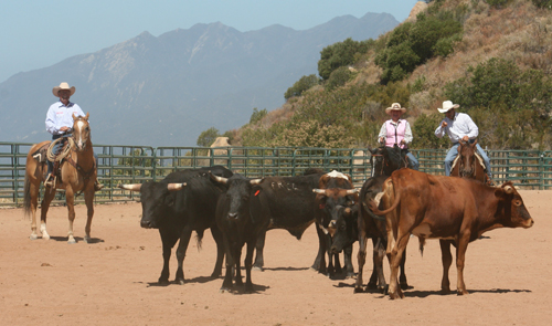 Are You Ready For A Horsemanship Clinic?