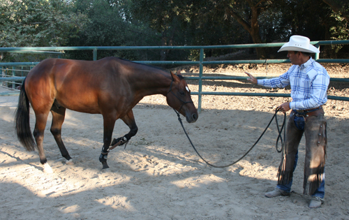 Hobbling Your Horse