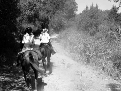 What Is The American Competitive Trail Horse Association?
