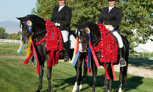 Unprecedented Sweep of the 2010 Arabian Sporthorse Nationals by Father and Daughter