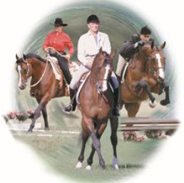 Dressage Training For All Breeds And For All Disciplines, Part 1