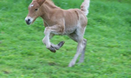 Thoughts On Foal Handling
