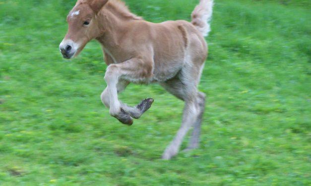 No More Horses!