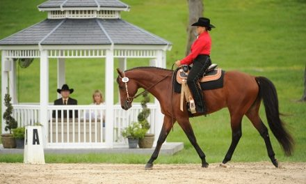 Western Dressage: Finding A Suitable Horse