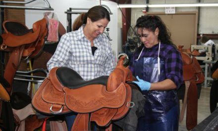 Is My Saddle Causing My Horse's Issues?