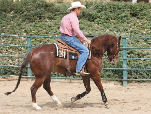 The Counter-Canter