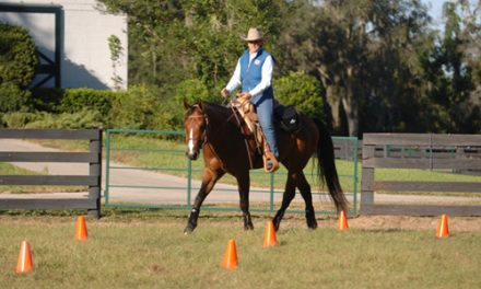 Dressage Training For All Breeds And For All Riding Disciplines, Part 2
