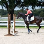 Three Common Mistakes that Erode Your Horse's Trust