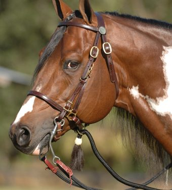 Evaluate Your Horse