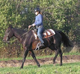 The Western Pleasure Horse, Part 3