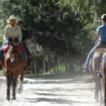 My Trail Horse Spooks and Lacks Focus
