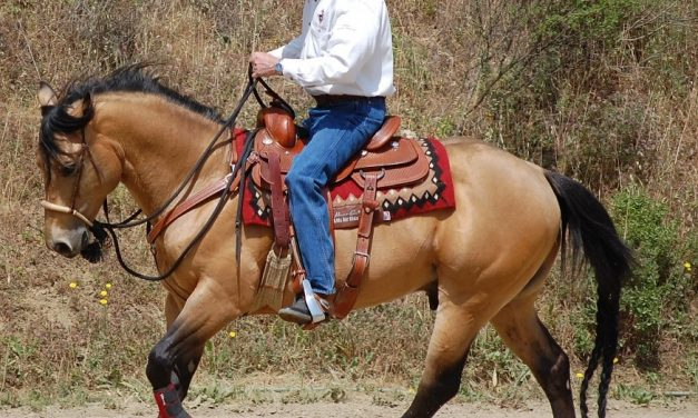 Water issues for horses when traveling