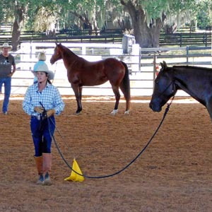 The Magic and Mystique of Horsemanship Clinics