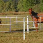 A Horse, Of Course