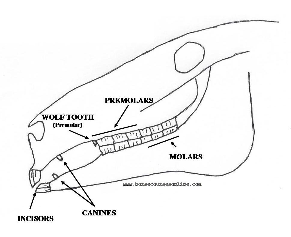 Goat Eye Diagram