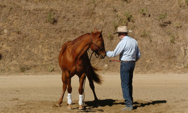 Personality and How It Can Effect the Training of Your Horse — Part II
