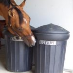 Storing Horse Feed