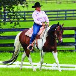 """Western Dressage: Finding a Suitable Horse"""