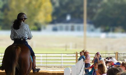 The Magic and Mystique of Horsemanship Clinics