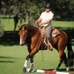 Western Dressage: Learning the Dressage Training Pyramid