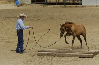 Dealing with a Horse That Rears