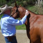 Teaching Your Horse to Accept the Clippers